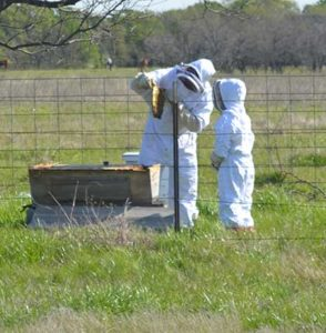 Beekeeping with my kids.