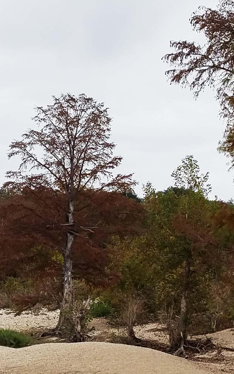Autumn in McKinney State Park, Austin, TX